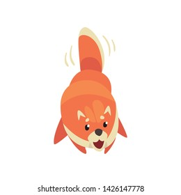 Cute Pomeranian Spitz Wagging His Tail, Funny Pet Dog Cartoon Character Vector Illustration