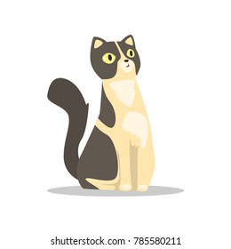 Cute portrait of short-haired cat with black markings on head and back. Cartoon character of domestic animal with funny muzzle. Flat vector for poster of vet clinic