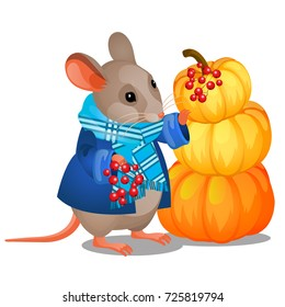 Cute poster with gray mouse in scarf holding bunch of red berries and pile of ripe pumpkins isolated on white background. Sketch for poster harvest holiday or thanksgiving day. Vector cartoon close-up