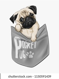 cute pug in shirt pocket illustration