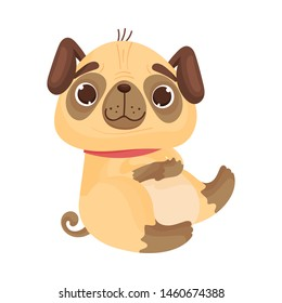 Cute pug is sitting. Vector illustration on white background.