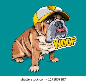"""Cute puppy Bulldog in a yellow cap and with a sign """"Woof"""" on a green background. Humor card, t-shirt composition, hand drawn style print. Vector illustration."""