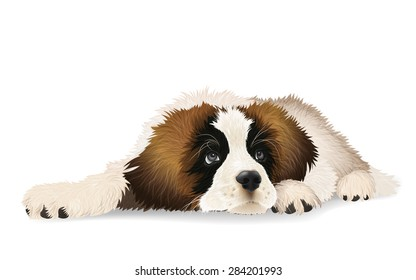 Cute puppy lying sad. The breed St. Bernard dog. Isolated vector illustration.
