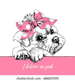 Cute puppy Maltese in a pink polka dot headband. Vector Illustration.