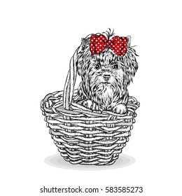 Cute puppy in a wicker basket. Yorkshire Terrier. Beautiful dog. Vector illustration for a card or poster.