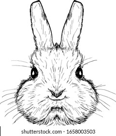 A cute rabbit face. Hand drawn vector illustration.