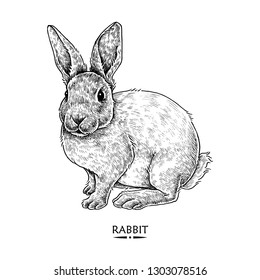 Cute Rabbit Illustration, Hand drawn Style, isolated Vector