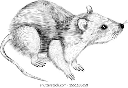 cute rat black and white symbol of new year