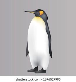 Cute Realistic Emperor Penguin illustration Aptenodytes forsteri Antarctica