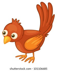 Cute red bird on a white background