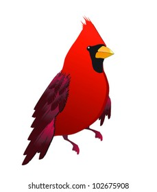 Cute red cardinal bird illustration
