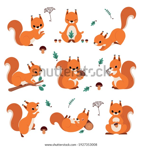 Cute Red Squirrel Holding Acorn and Sitting on Tree Branch Vector Set