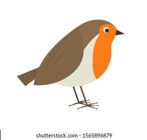 Cute robin bird. Vector illustration.