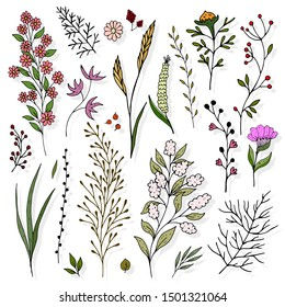 Cute romantic colorful set of twigs and flowers. nature theme. vector illustration. hand drawing