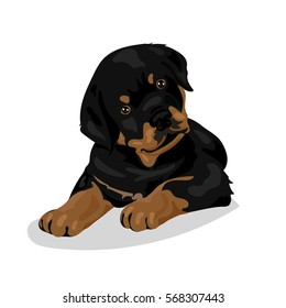 cute rottweiler dog at the white background