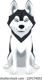 Cute Siberian Husky Purebred standing front view dog, vector illustration.