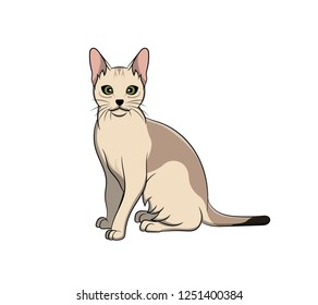 Cute Singapura Cartoon Cat. Vector illustration of purebred singapura cat.