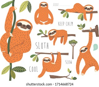 Cute Sloth Hanging on Tree Collection set
