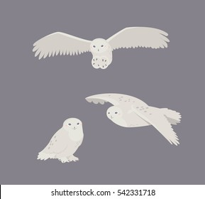 Cute snowy owl sitting, flies, attack. Vector flat illustration