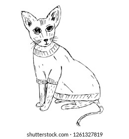Cute Sphynx cat in clothes sketch, vector