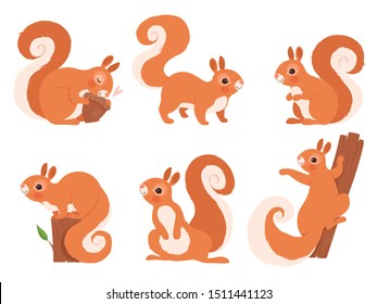 Cute squirrel. Zoo little forest animals in action poses wildlife squirrel vector cartoon character