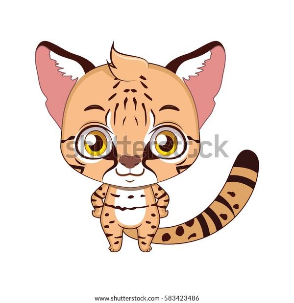 Cute stylized cartoon kodkod illustration  ( for fun educational purposes, illustrations etc. )