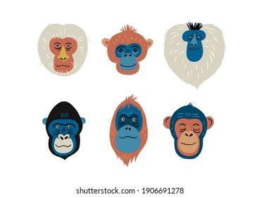 Cute vector primates in flat style. Chimpanzee, Orangutan, Gorilla, Lion-tailed macaque, Mandrill, Pygathrix roxellana, Macaca fuscata - primates cartoon character. Vector print in modern style