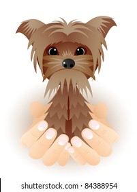 Cute vector Yorkshire puppy dog sitting in hands