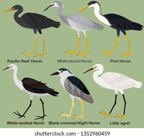 Cute wading bird vector illustration set, White-faced Heron, White-necked, Pied, Pacific Reef Heron, Black-crowned Night Heron, Little egret, Colorful bird cartoon collection