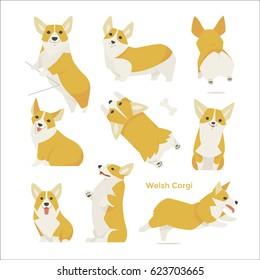 cute Welsh Corgi puppy vector illustration flat design