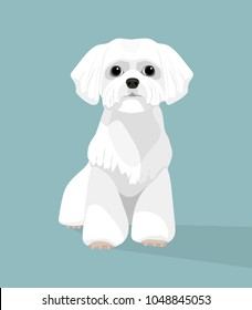 Royalty Free Small White Dog Images Stock Photos Vectors