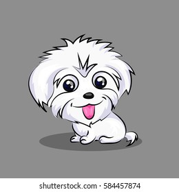 cute white maltese dog fluffy funny isolated