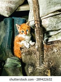 Cute white and orange kitten sitting in old barn. Vector eps10.