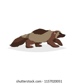 Cute wolverine. Cartoon comic style vector illustration of forest wild animal. Predator, dangerous animal drawing. Europe and north America animal.