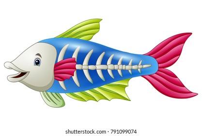 Cute x-ray fish cartoon