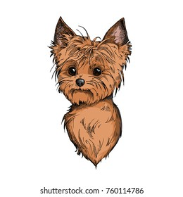 Cute Yorkshire Terrier face illustration. Hand drawn vector dog