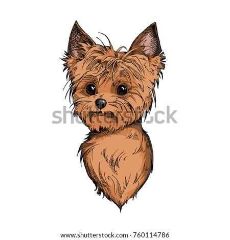Cute Yorkshire Terrier Face Illustration Hand Stock Vector Royalty