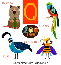 Cute zoo alphabet in vector.Q letter. Funny cartoon animals:Quokka,quetzal,quail,queen bee. Alphabet design in a colorful style.