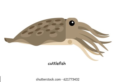 """Cuttlefish - sometimes referred  as the """"chameleon of the sea,"""" for its ability to masquerade as the color of its habitat."""