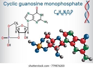 Cyclic guanosine monophosphate (cGMP)  molecule. It is a nucleotide, important second messenger in many biological processes Structural chemical formula and molecule model. Vector illustration