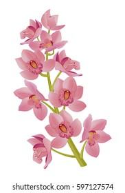 Cymbidium - pink orchid