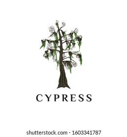 Cypress tree vector logo. Cypress tree icon