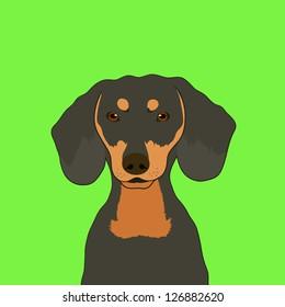 Dachshund, The buddy dog