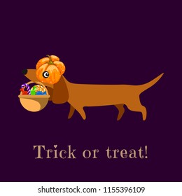 Dachshund in carries a pumpkin basket with sweets. The inscription Trick or Treat. Poster, postcard, stand. Vector