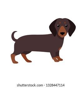 Dachshund. Cute purebred dog. Isolated vector illustration