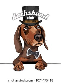 Dachshund Dog in a gentleman top hat and with a polka dots bow tie. Vector illustration.