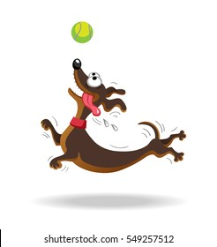 Dachshund dog playing with tennis ball. Vector illustration. Isolated on white background.