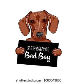 Dachshund dog Dog prison. Dachshund criminal. Arrested dog. Dachshund bad boy. Vector illustration.