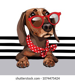 Dachshund Dog in a red sunglasses and with a polka dots neck scarf on a striped background. Vector illustration.