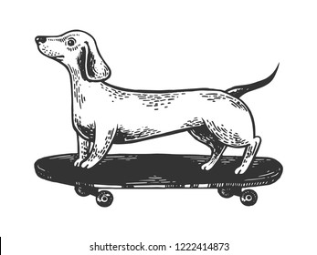 Dachshund dog ride on skateboard engraving vector illustration. Scratch board style imitation. Black and white hand drawn image.